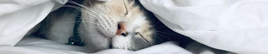 cum adormi