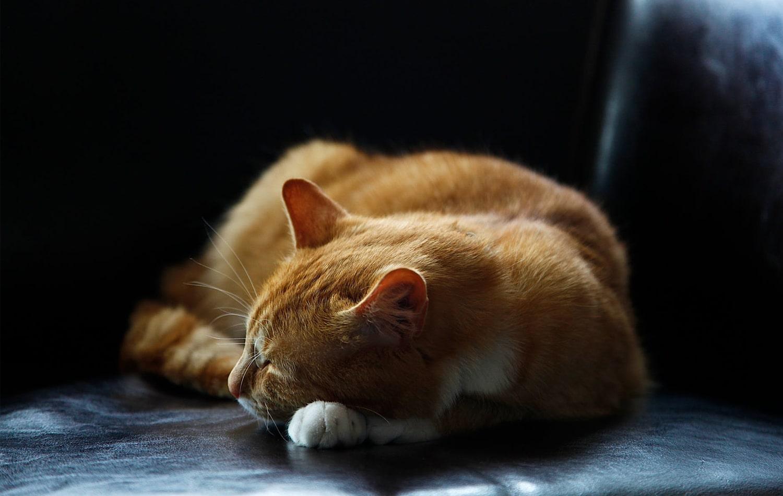 Somnul odihnitor